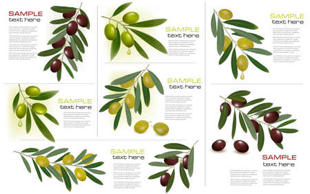 oil crops: Set of backgrounds with green and black olives. Vector illustration.