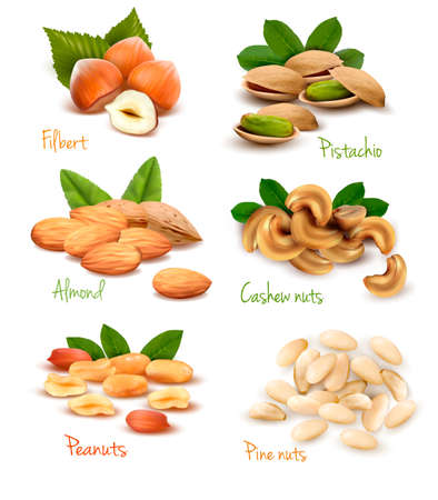 peanut: Big collection of ripe nuts. Vector