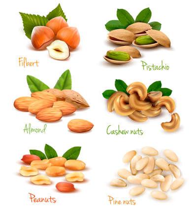 cacahuate: Gran colección de nueces maduras. Vector Vectores