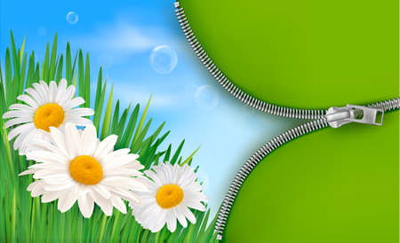 daisy flower: Nature background with spring flowers and open zipper. Vector illustration.  Illustration