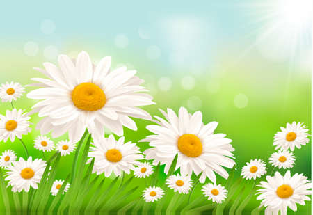 margerite: Beautiful background with grass and daisies    Illustration