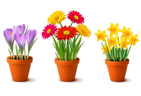 Spring colorful flowers in pots    Stock Vector - 12987368
