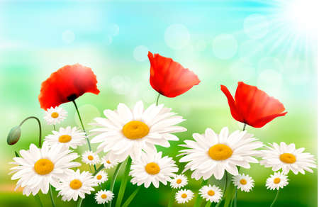 unzip: Nature background with summer flowers and open zipper  Vector illustration  Illustration
