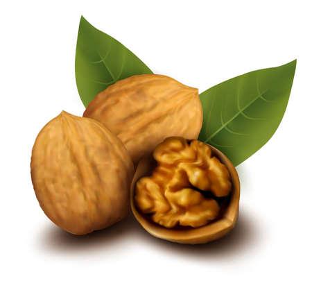 Walnuts and a cracked walnut  Vector illustration  Stock Vector - 13110511