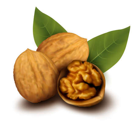 edible: Walnuts and a cracked walnut  Vector illustration