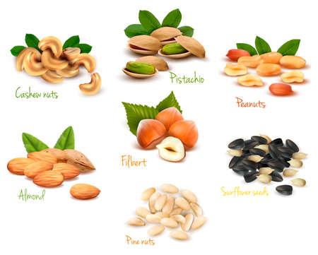 frutos secos: Gran colecci�n de vectores nueces maduras Vectores