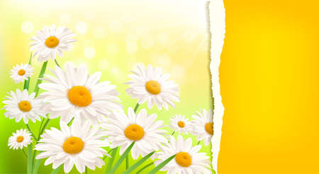 Nature background with fresh daisy and ripped paper   illustration Stock Vector - 13133058