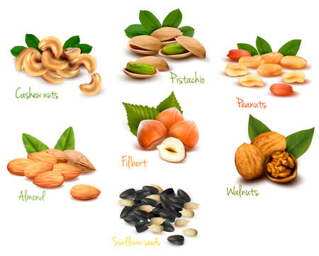 filbert nut: Big collection of ripe nuts  Vector  Illustration