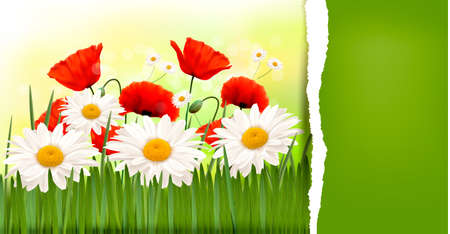 Spring background with red poppies and daisies  Vector Vector