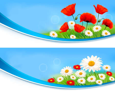 Beautiful banners with daisies and poppies Vector