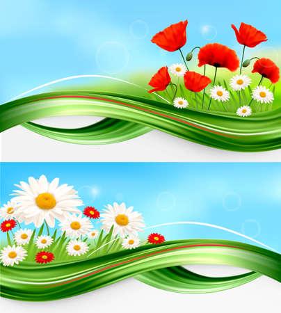 夏のデイジーとポピーの自然バナー  イラスト・ベクター素材
