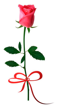 Beautiful red rose with a bow  Vector Vector