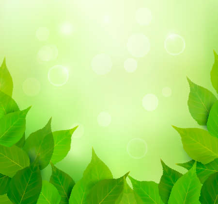 Nature background with fresh green leaves  Vector illustration  Stock Vector - 13929581