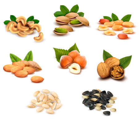 filbert nut: Big collection of ripe nuts and seeds  Vector  Illustration
