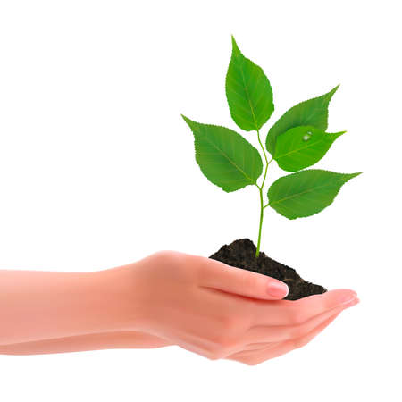 hands holding earth: Hands holding young plant  Vector