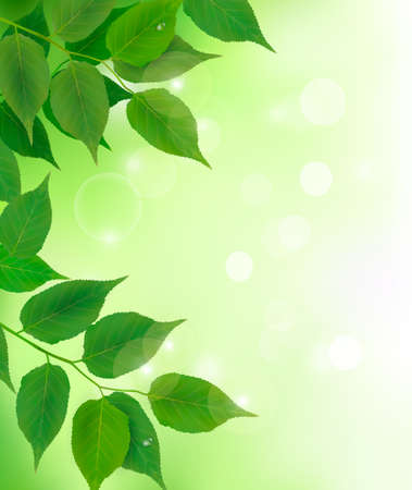 photosynthesis: Nature background with fresh green leaves