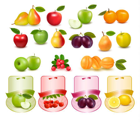 plums: Group with different sorts of fruit and labels. Vector. Illustration
