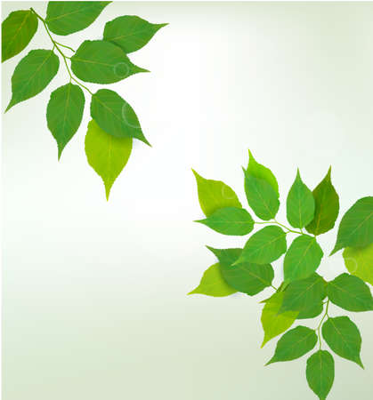 Nature background with green fresh leaves illustration Stock Vector - 14487942