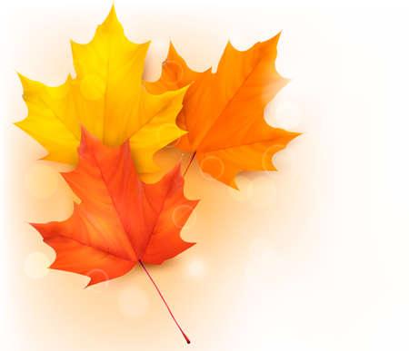 Otoño de fondo con las hojas