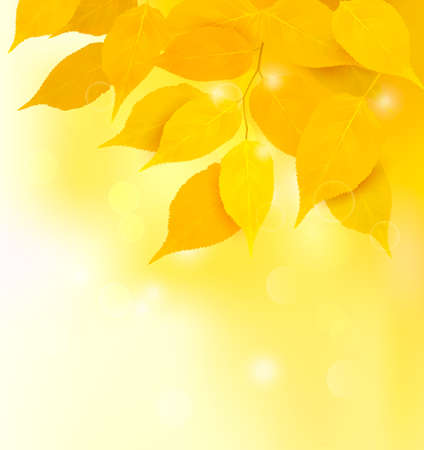 Autumn background with yellow leaves  Back to school  illustration  Vector