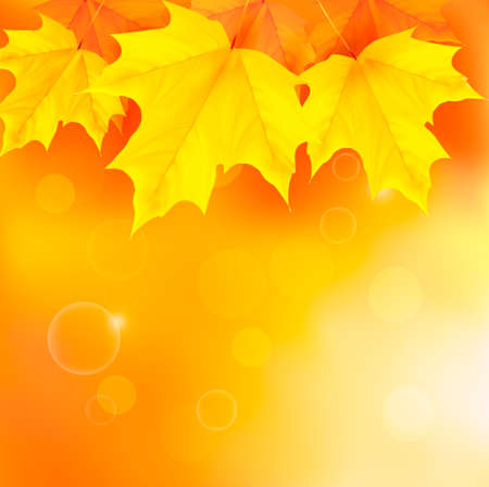 Autumn background with yellow leaves  Back to school illustration Stock Vector - 14661609