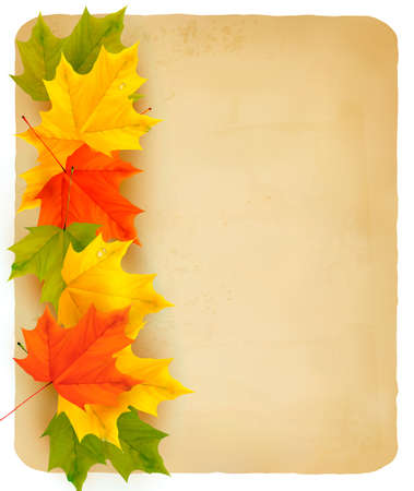 Autumn background with color leaves and card  Vector illustration  Vector