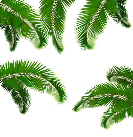 macro leaf: Set of palm leaves on white background  Vector illustration