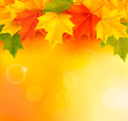 autumn background:  Autumn background with leaves  Back to school  illustration
