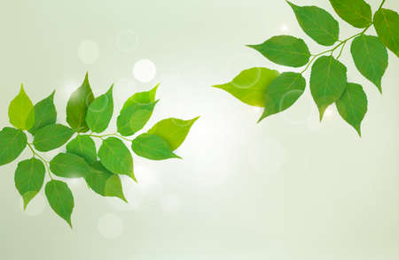 Nature background with green fresh leaves  illustration Stock Vector - 14838623