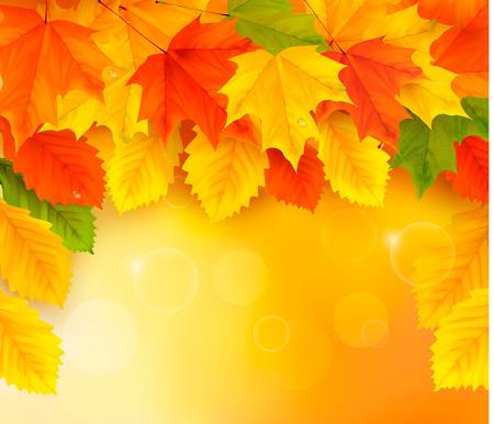 Autumn background with leaves  Back to school  illustration  Stock Vector - 14897422