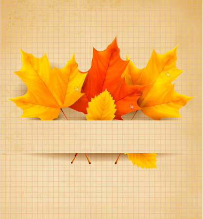 Colorful autumn leaves on a old paper  Back to school background   Vector