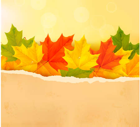 Autumn leaves with old paper  Back to school  Vector  Stock Vector - 14950489