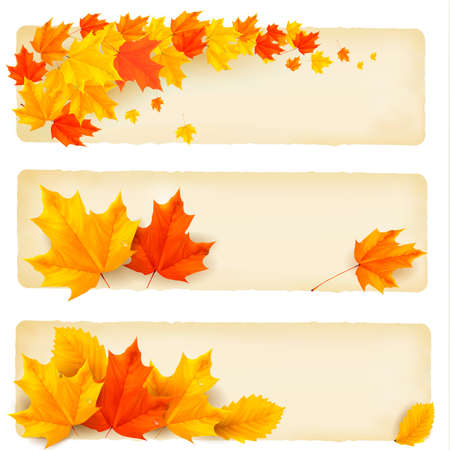 three leaves: Three autumn banners with colorful leaves  Vector