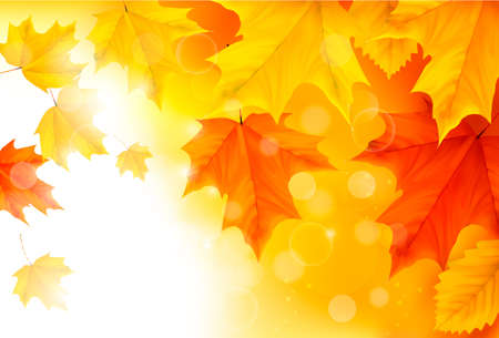 Autumn background with leaves  Back to school illustration Stock Vector - 15039471
