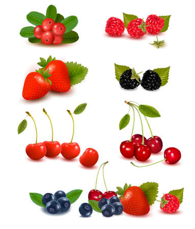 Big group of fresh berries  Vector illustration  Illustration