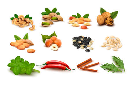 basil herb: Gran conjunto de frutos secos y semillas maduras y especias vectoriales Vectores