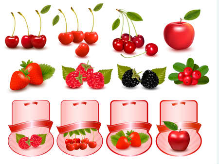 Big set of fresh cherries and fruit and labels  Vector Vector