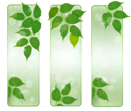 Three nature banners with green fresh leaves . Vector illustration. Stock Vector - 15514080