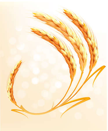 wheat illustration: Ears of wheat background.