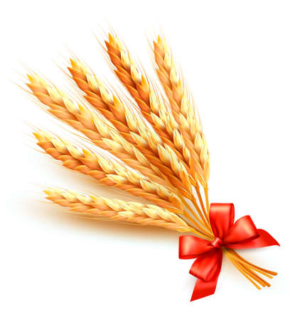 Ears of wheat with red bow.  Vector