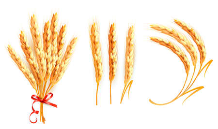Set of ears of wheat. Stock Vector - 15400392