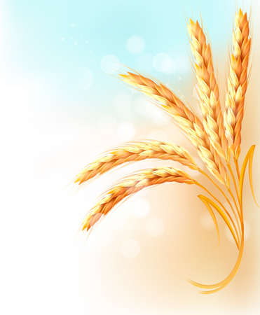 wheat illustration: Ears of wheat in front of blue sky