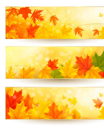 Three autumn banners with colorful leaves in golden frames Vector