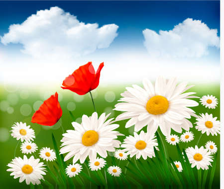 margerite: Nature background with beautiful flowers and blue sky Illustration