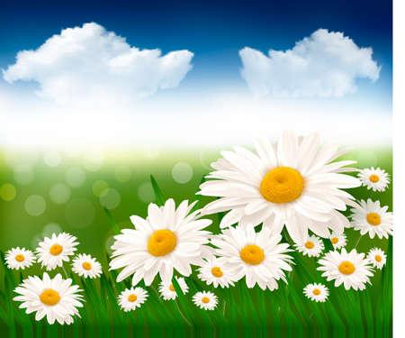 aire puro: La naturaleza de fondo con hermosas flores y el cielo azul Vectores
