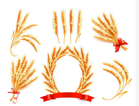 wheat illustration: Ears of wheat
