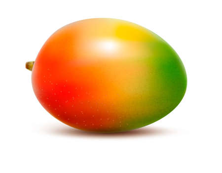 Mango isolated on white.  Stock Vector - 16915261