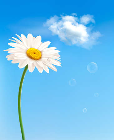 white daisy: Beautiful white daisy in front of the blue sky. Vector.