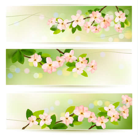 blossoming: Three spring banners with blossoming tree brunch with spring flowers. Vector illustration.