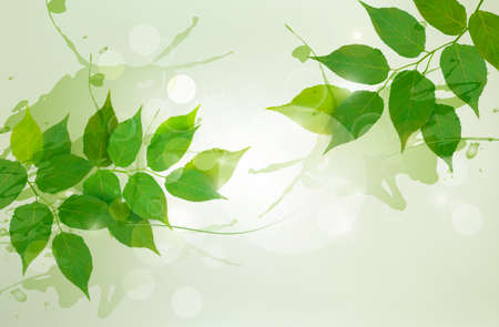Nature background with green spring leaves Stock Vector - 17920818